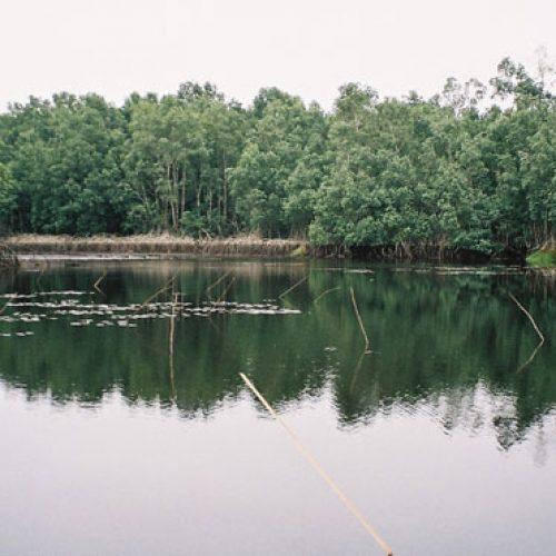 Forêts : La gouvernance préoccupe à l'Est