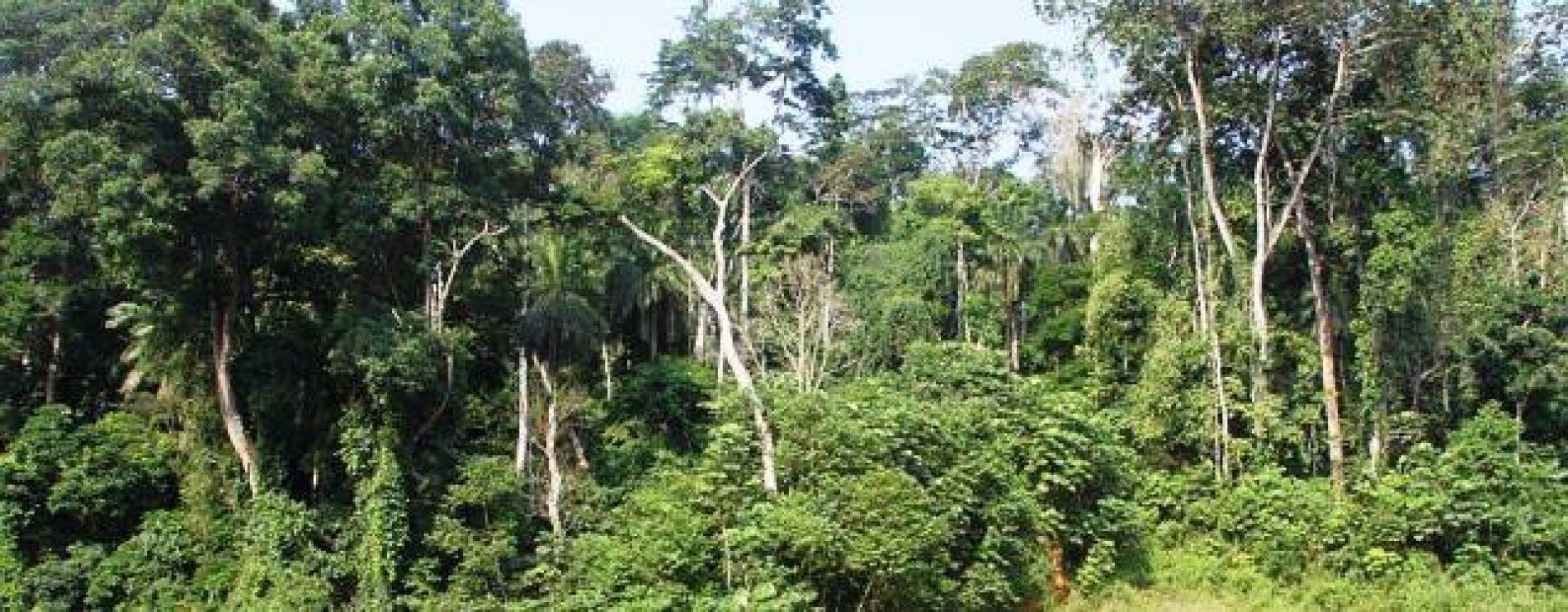 Gouvernance forestière : Un ouvrage sur l'Afrique Centrale en chantier