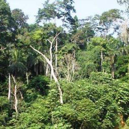 Commune de Ngwei: les communautés locales désarmées face à l'exploitation illégale des forêts