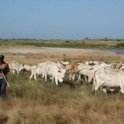 Nord-Ouest: des mesures pour booster la productivité agropastorale