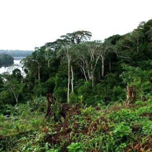 Adamaoua – La Commune de Nyambaka se mobilise en faveur du reboisement