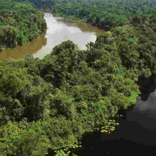 Brésil : un million d'arbres seront plantés au cours des six prochains mois !