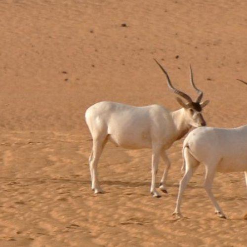 Niger : La plus grande réserve naturelle d'Afrique menacée par l'exploitation pétrolière