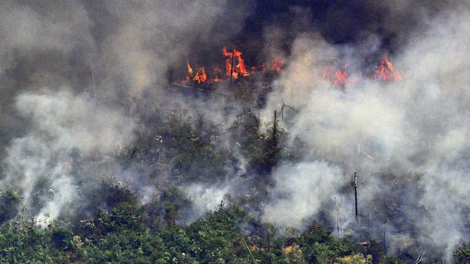 Incendies en Amazonie : Voici ce que vous devez savoir des conséquences climatiques!