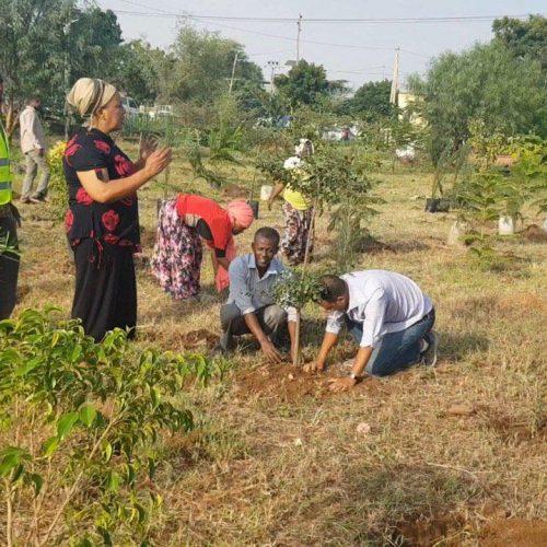 Environnement: L'Éthiopie bat le record d'arbres plantés en une journée!