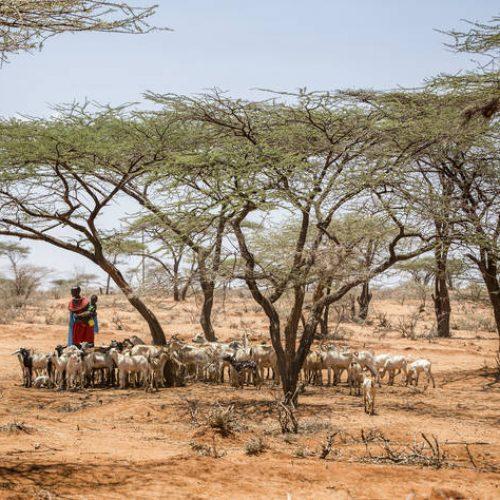 Le changement climatique causé par l'Homme a commencé il y a 7000 ans