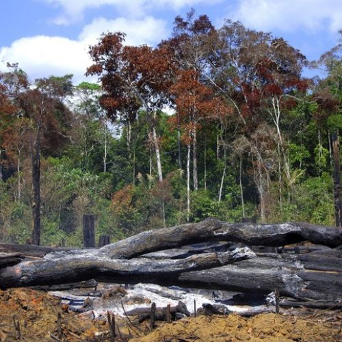 Brésil: 20 % des exportations vers l'Europe proviennent de la déforestation illégale