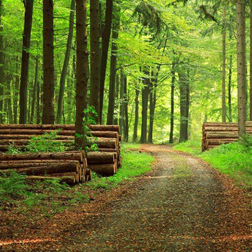Developpement des plantations forestières: 40.000 hectares à réaliser