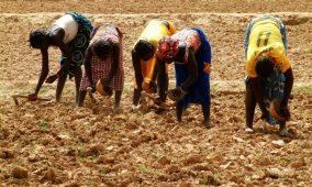 Mali – Changement climatique: L'UNESCO appuie l'ONG IWENE